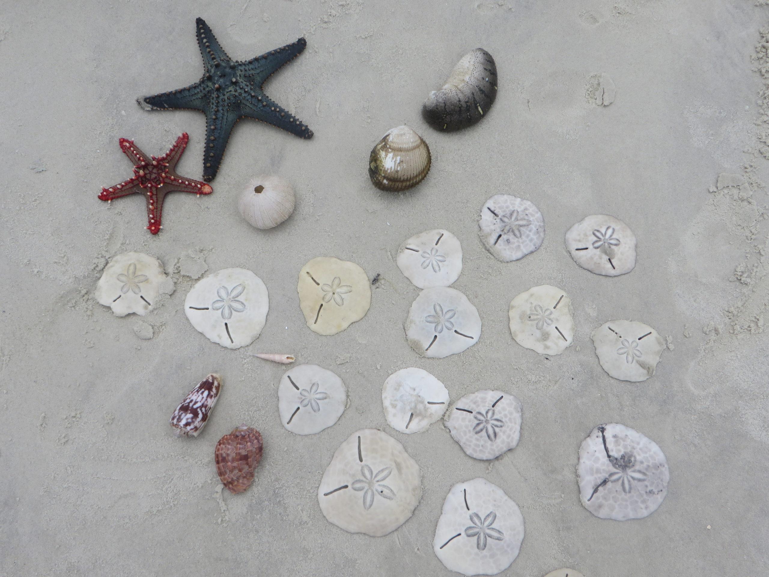 Funzi Island - Shells & starfish