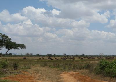 Tsavo East - Zicht met olifanten