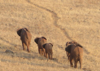 Tsavo East - Olifanten