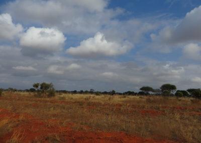 Tsavo East - Zicht met struisvogels
